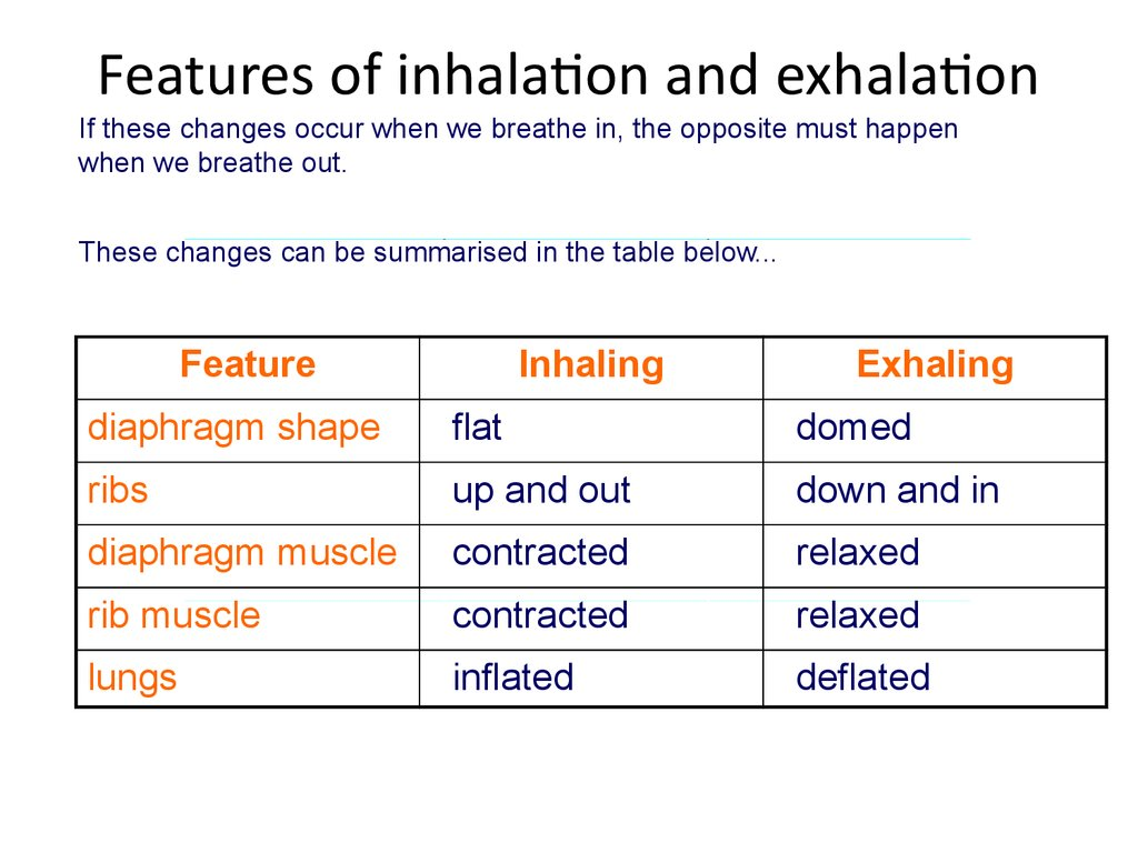Features of inhalation and exhalation