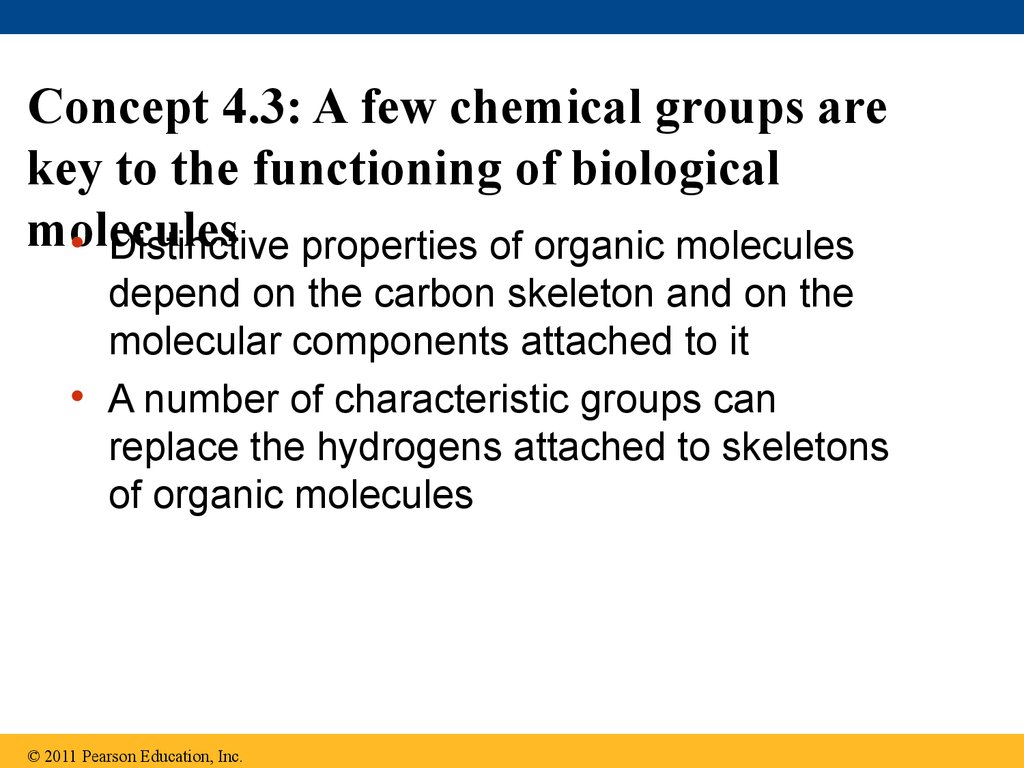 Concept 4.3: A few chemical groups are key to the functioning of biological molecules