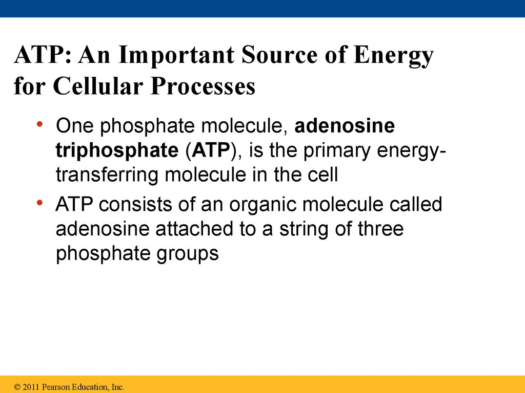 ATP: An Important Source of Energy for Cellular Processes