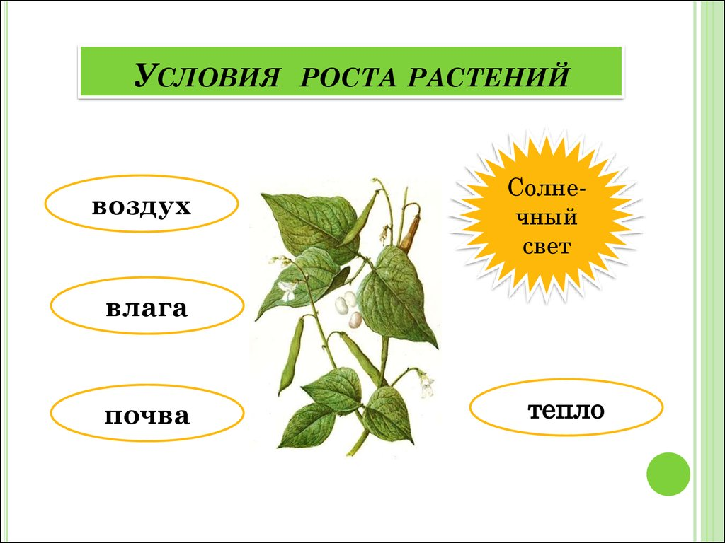 условия роста семян