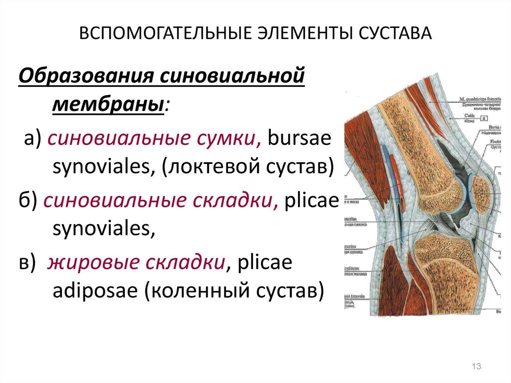 Вспомогательные образования в суставах ортопедические методы лечения при ложных суставах
