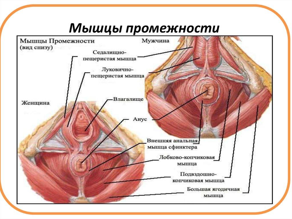 Волосатые киски в русском порно