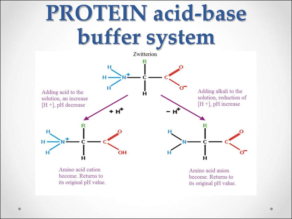 PROTEIN acid-base buffer system