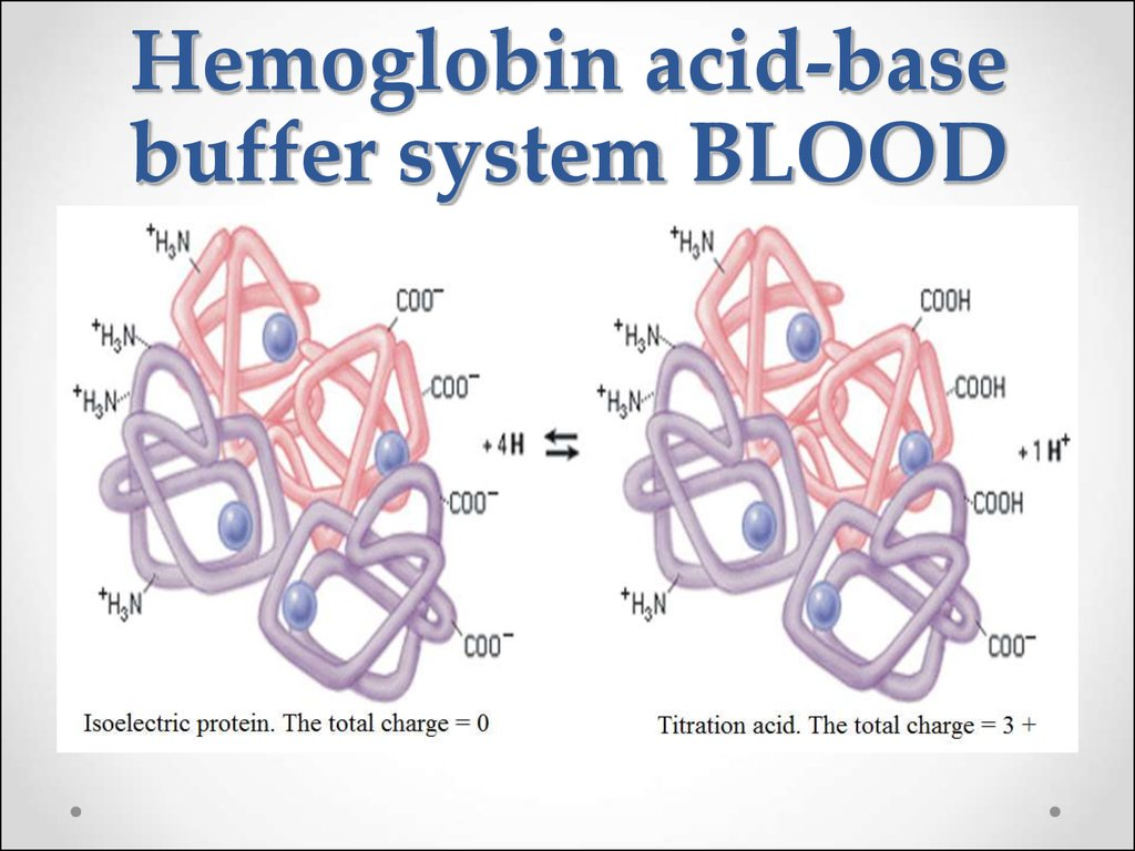 Hemoglobin acid-base buffer system BLOOD