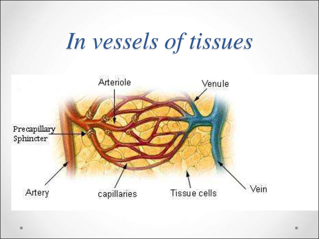 In vessels of tissues