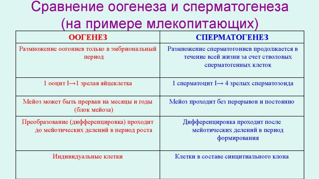 Сравнение сперматогинеза и овогинеза