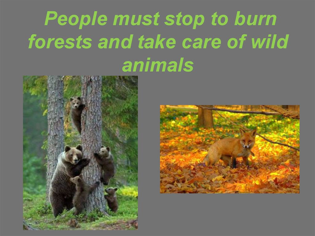 People must stop to burn forests and take care of wild animals