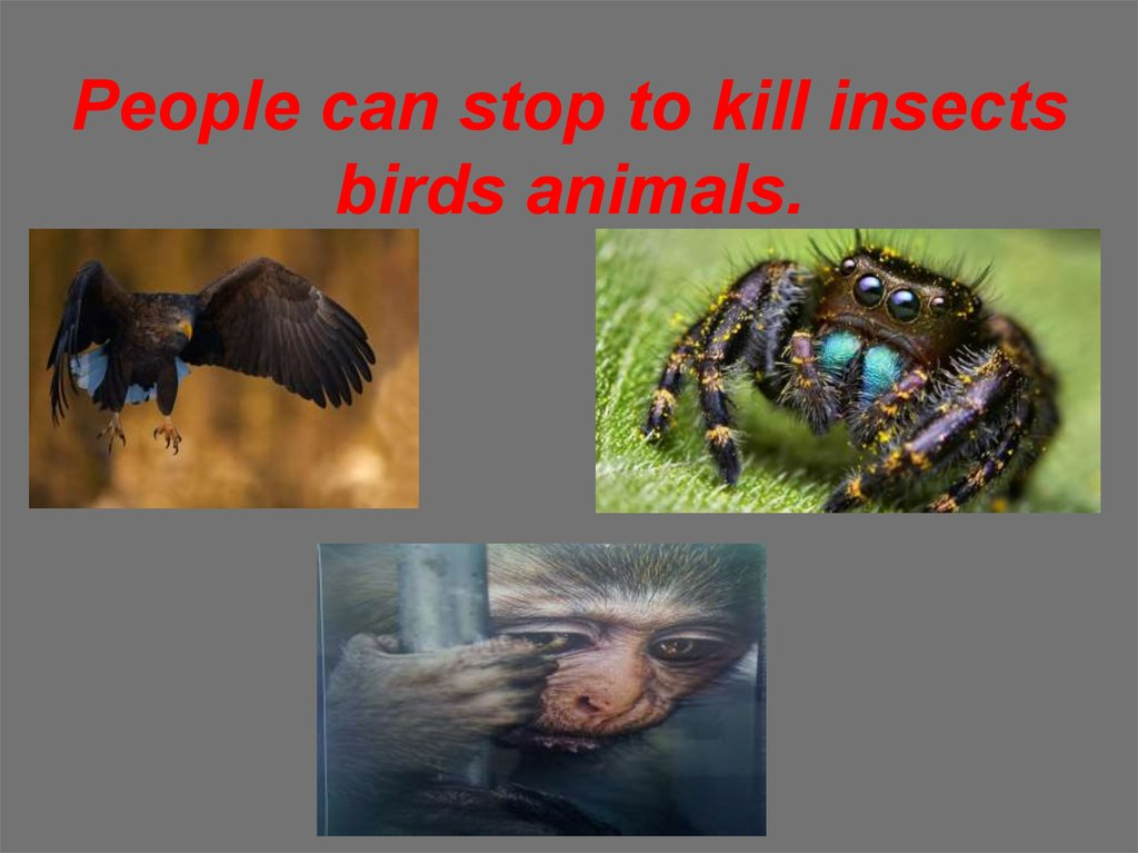 People can stop to kill insects birds animals.
