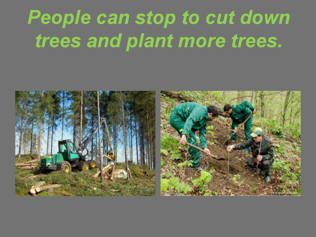 People can stop to cut down trees and plant more trees.