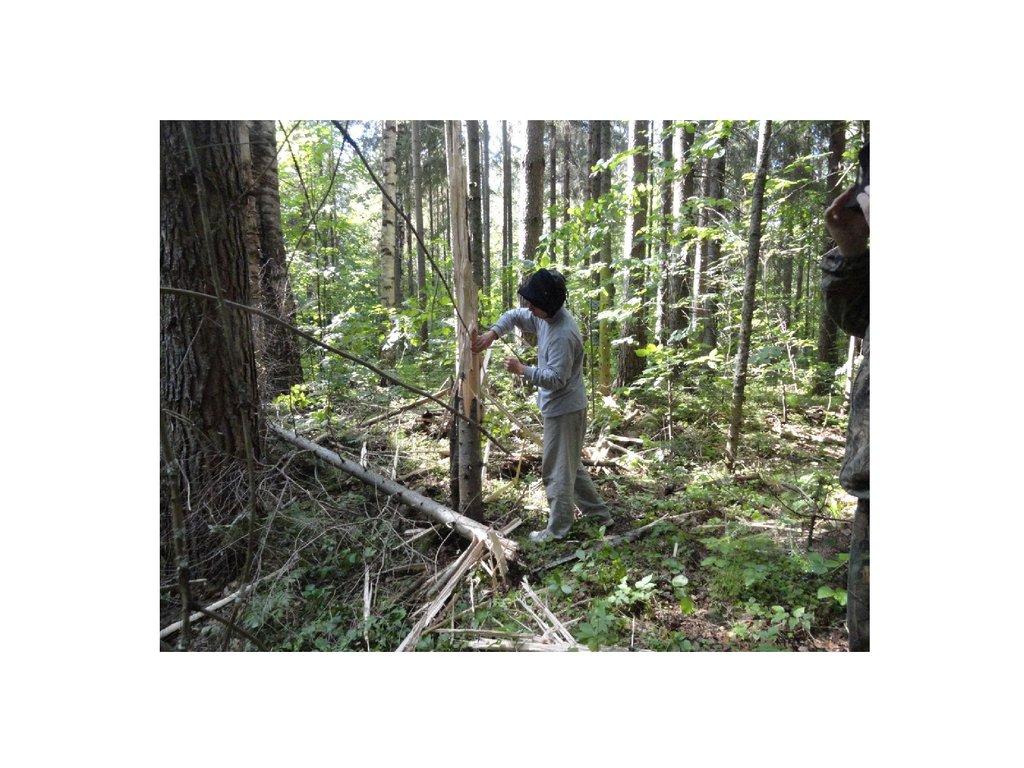 Растения Леса Беларуси Презентация