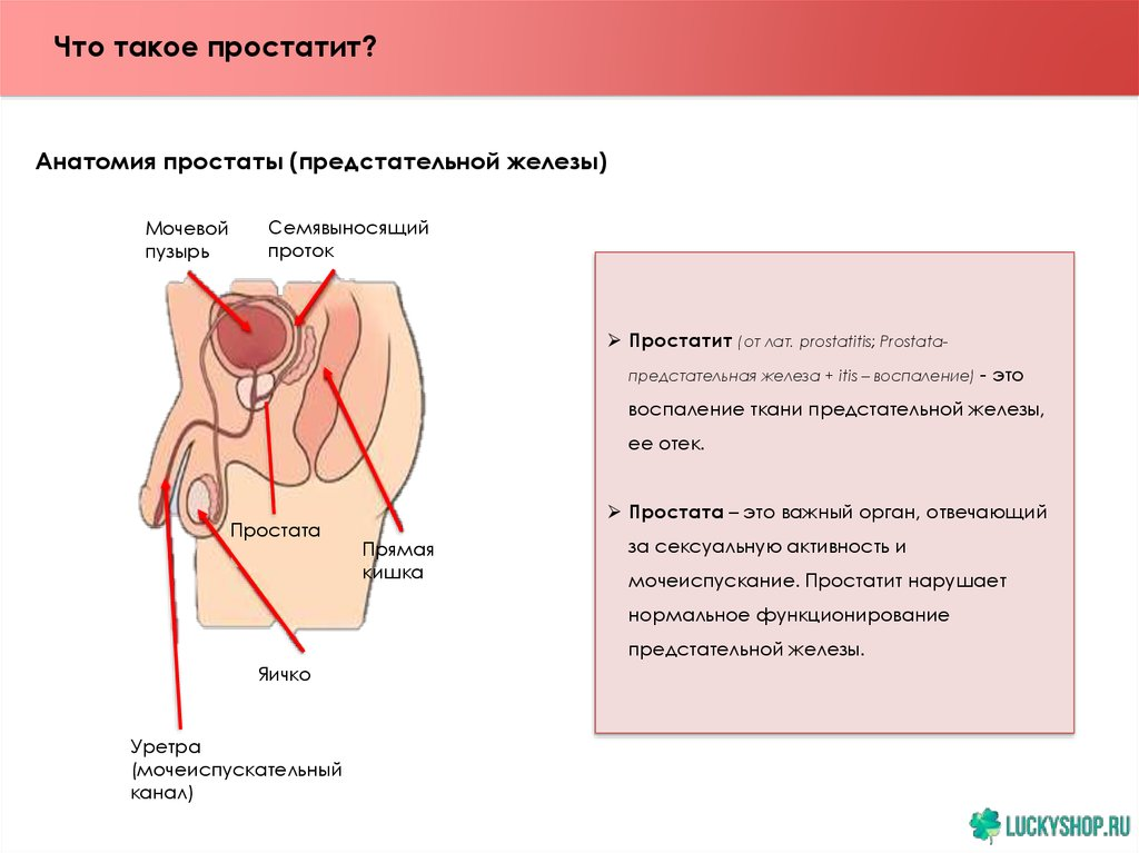 Побочные простатит лечение простатита у андролога