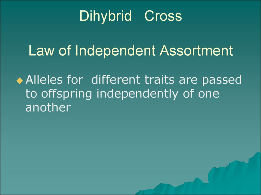 Dihybrid Cross Law of Independent Assortment