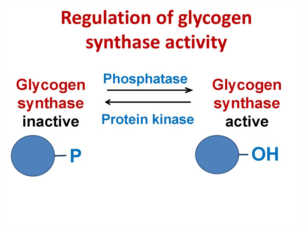 Regulation of glycogen synthase activity
