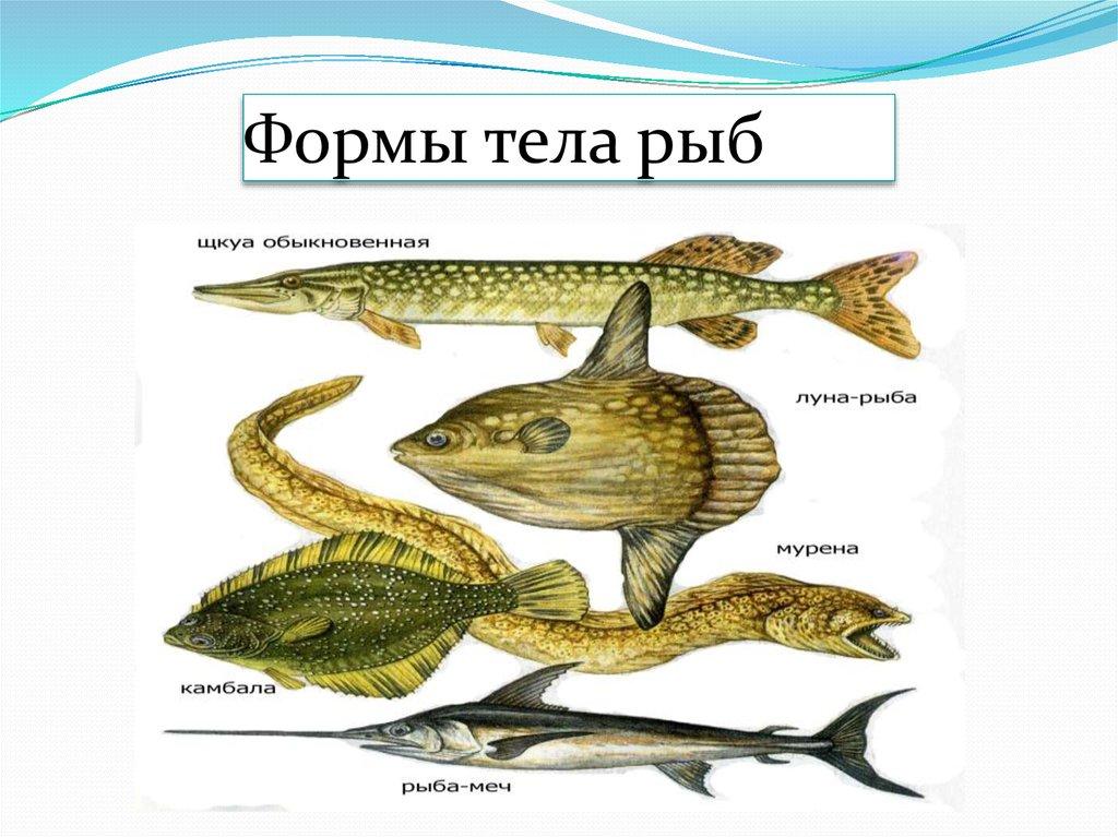 Как относятся рыбы к анальному сексу