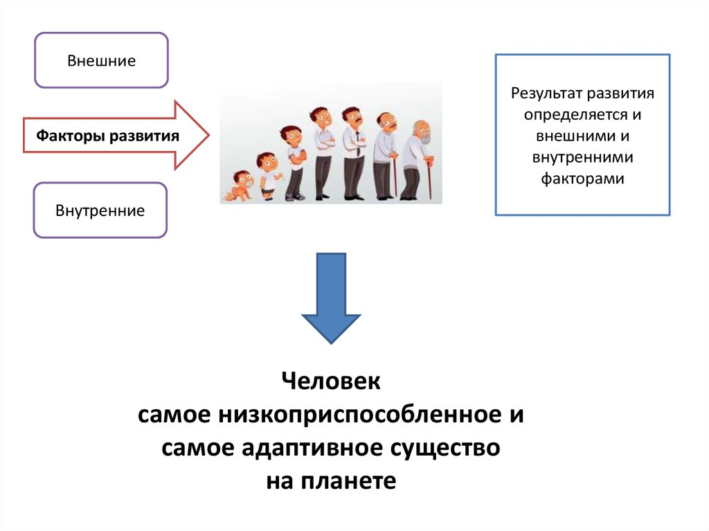 shop Огурцы