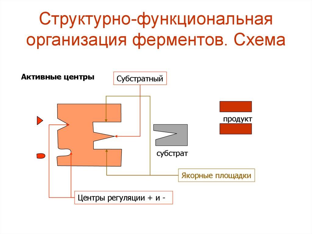 Структурно функциональная схема компьютера фото 155