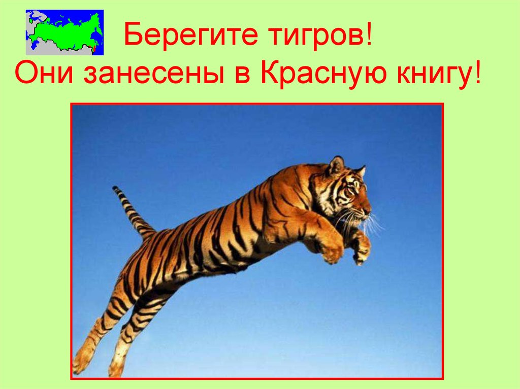 плакат о животных занесенных в красную книгу россии покажу вам виды