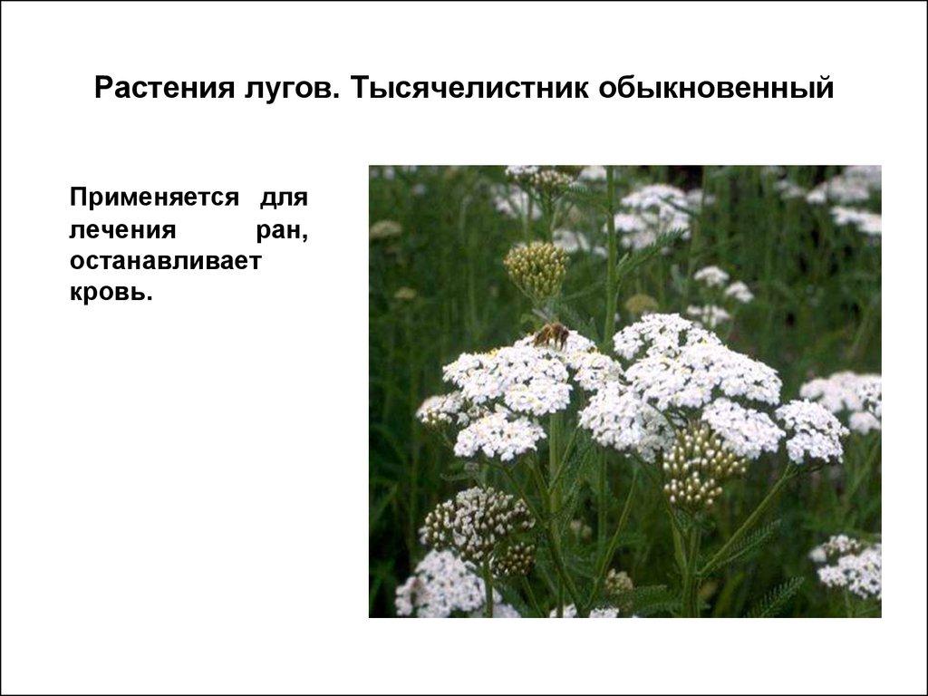 Лекарственные растения. Фитотерапия - презентация онлайн