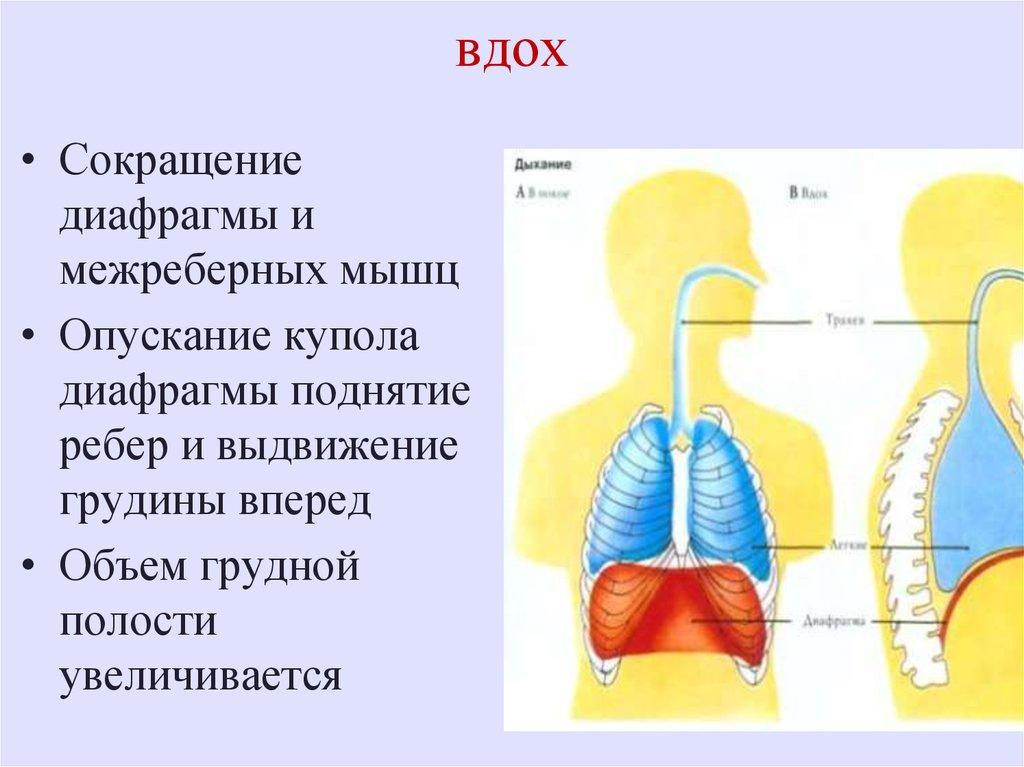 схема как дышать правильно картинка про дыхание обязательно должна быть