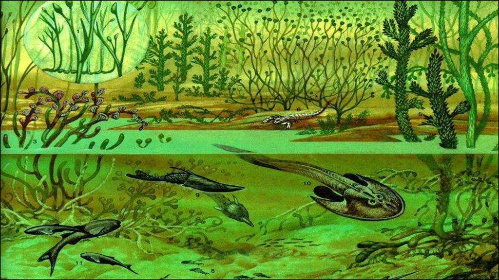 результате палеозойская эра с картинками кому даровано