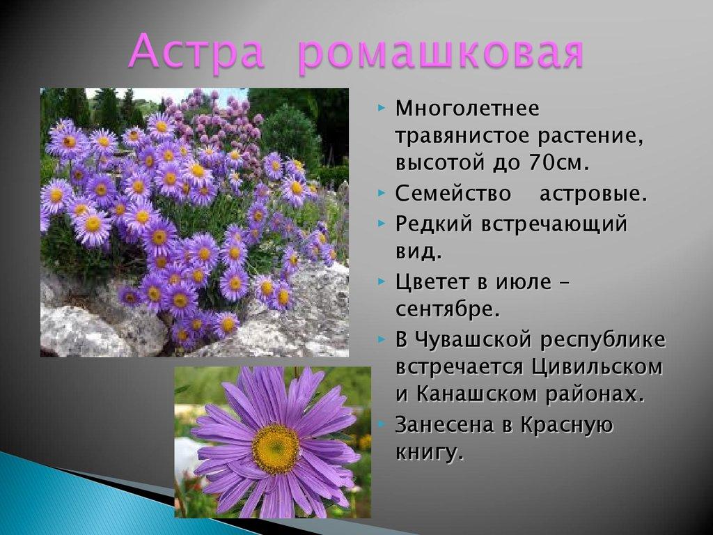 Цветы картинках описанием