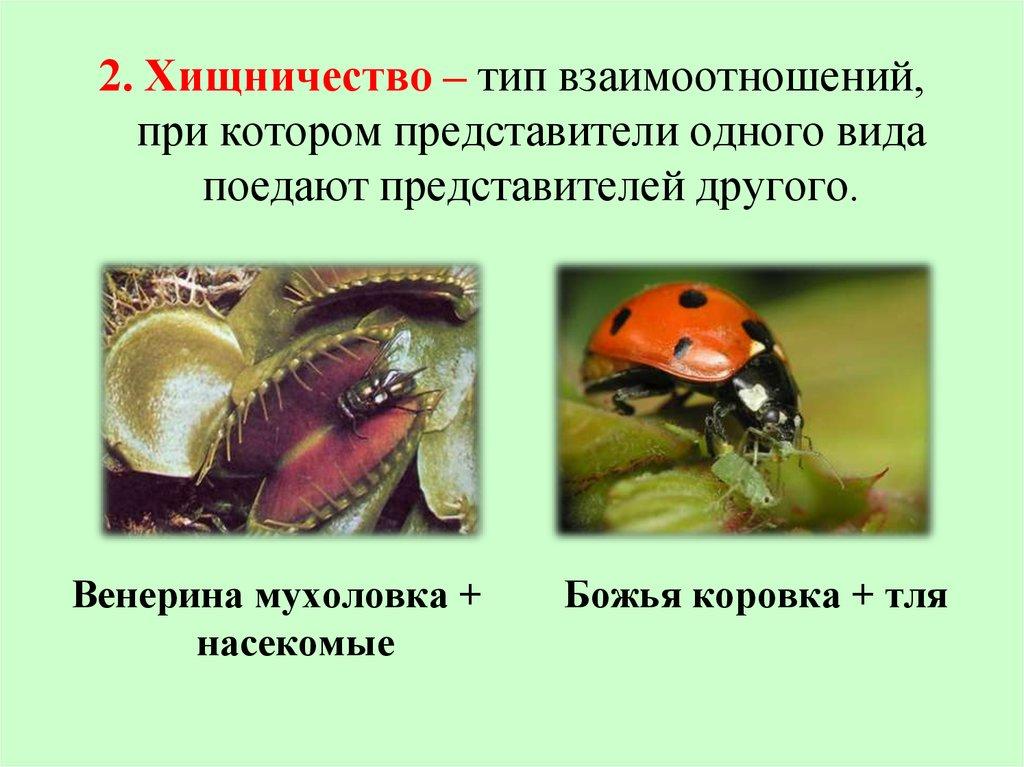 Схемы связи в природе