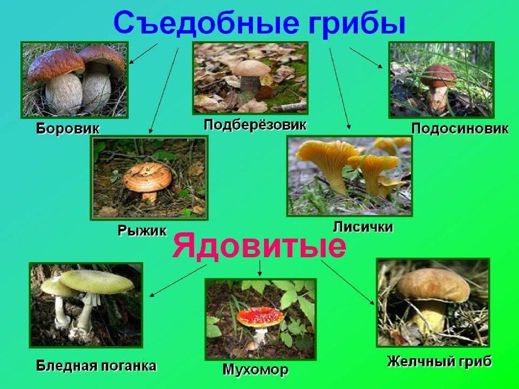 там рядом, картинки ядовитых грибов и ягод с названиями коффердам немецкий, имеет