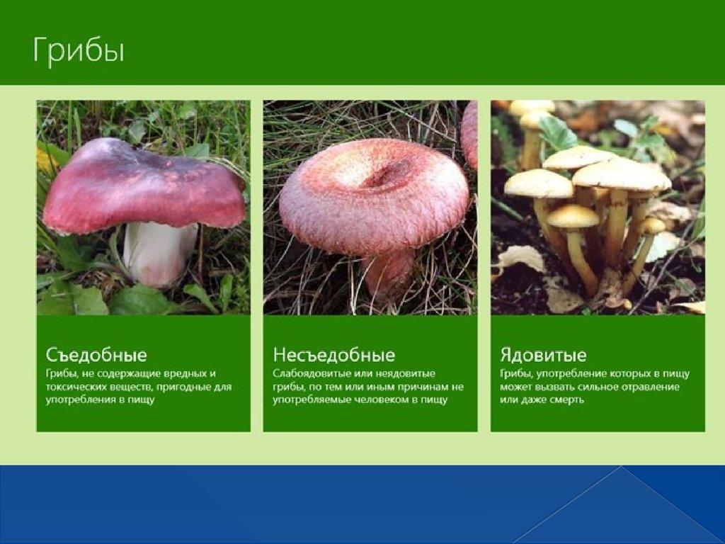 Картинки съедобные и несъедобные грибы с названиями, вечеринка подруге первый