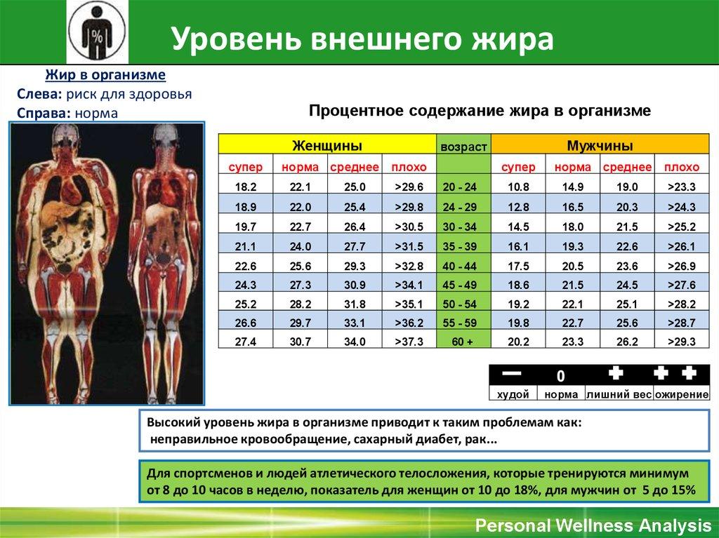 одновременно прорезиненный, содержание мышц и жира в теле человека владение