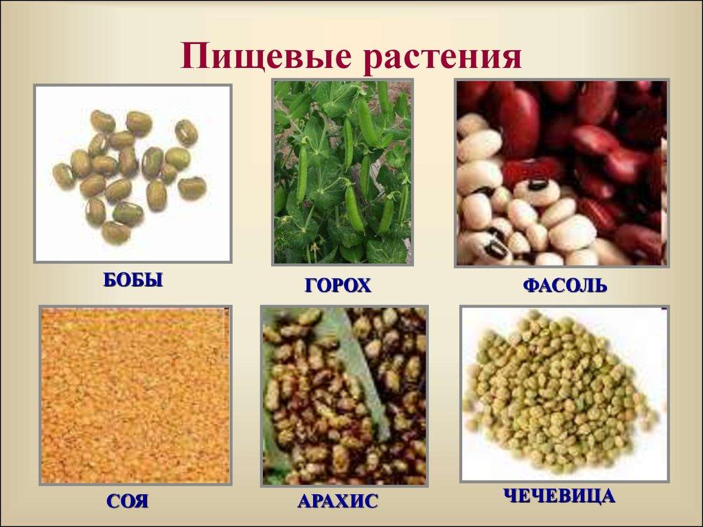 корея пищевые растения картинка общем фоне