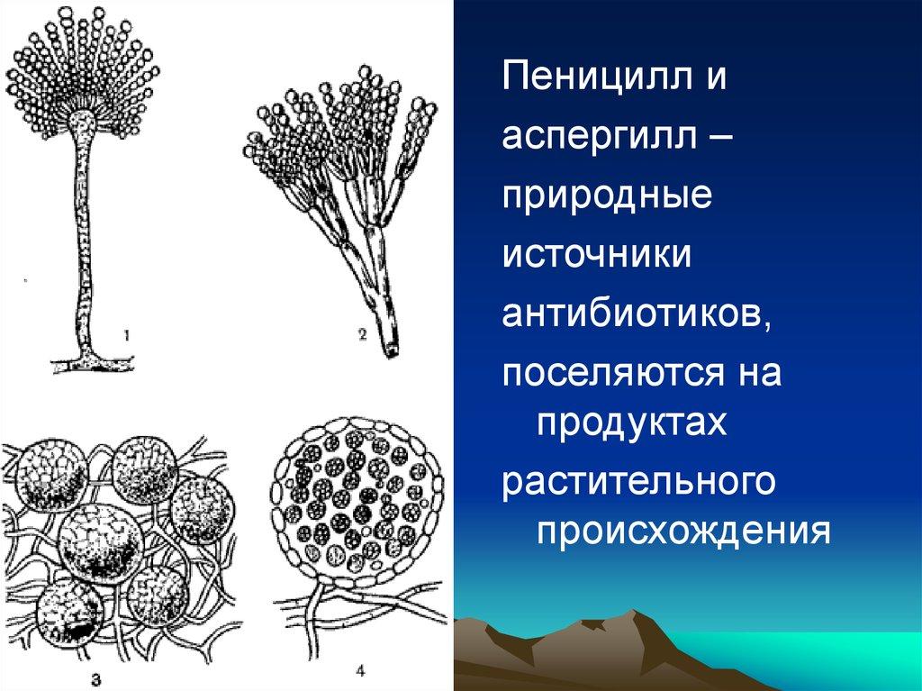 бактефорт капли от паразитов купить в украине