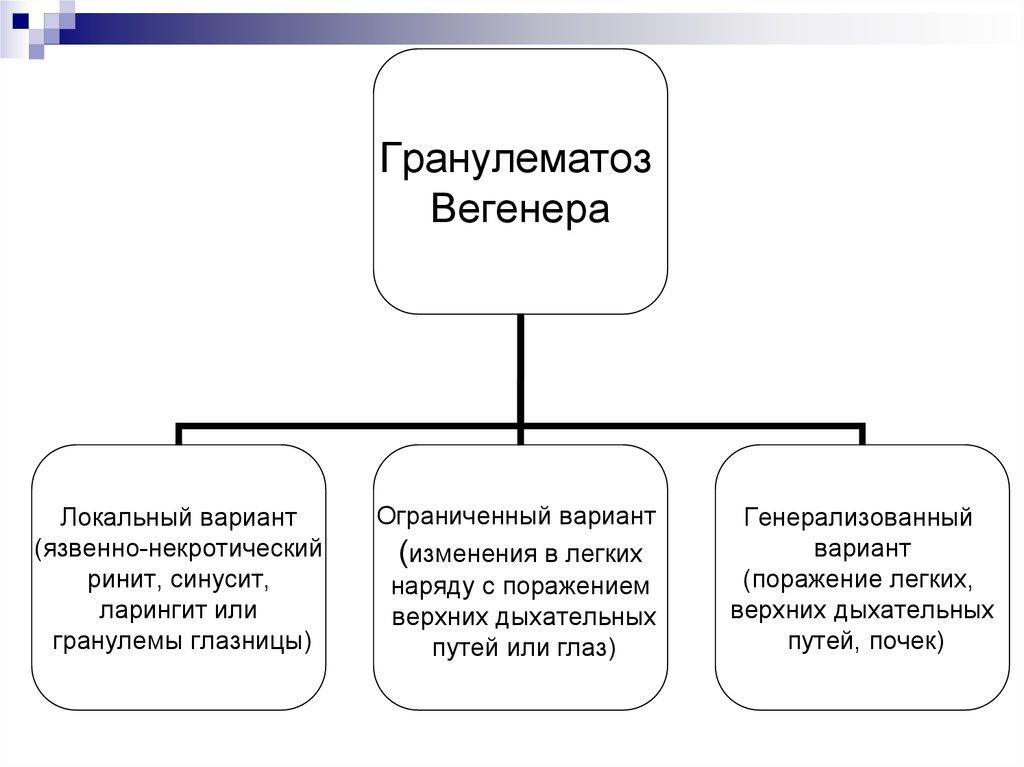 презентация гранулематоз вегенера