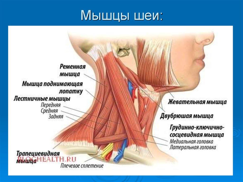 Миозит жевательных мышц