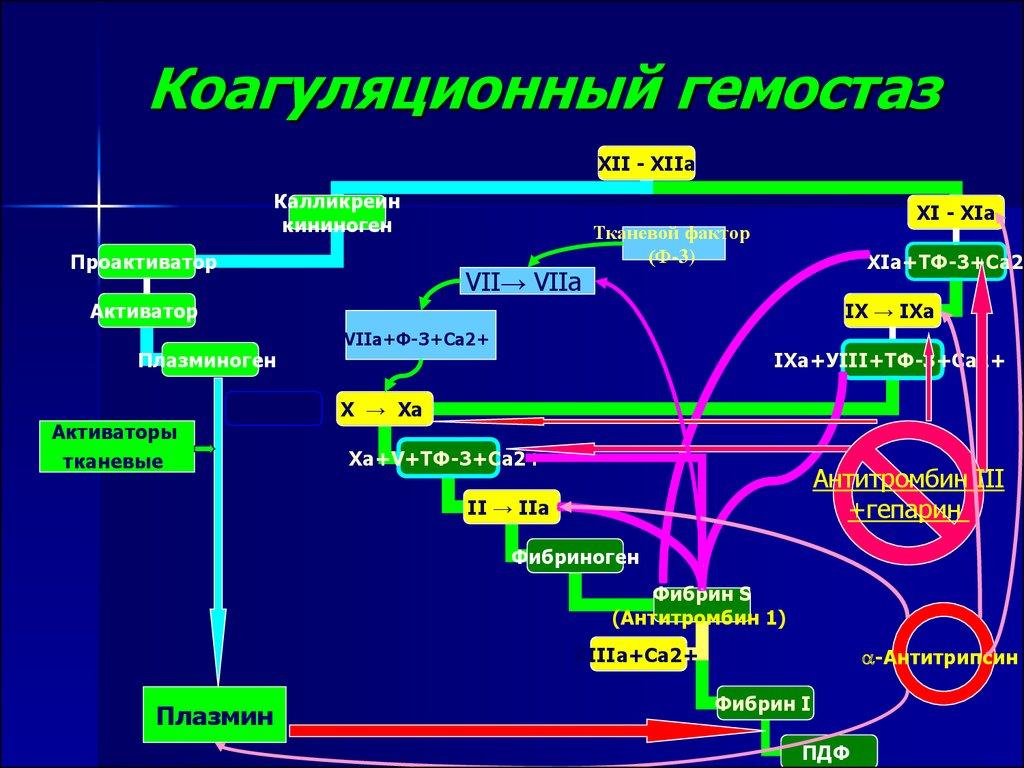 Механизм коагуляционного гемостаза