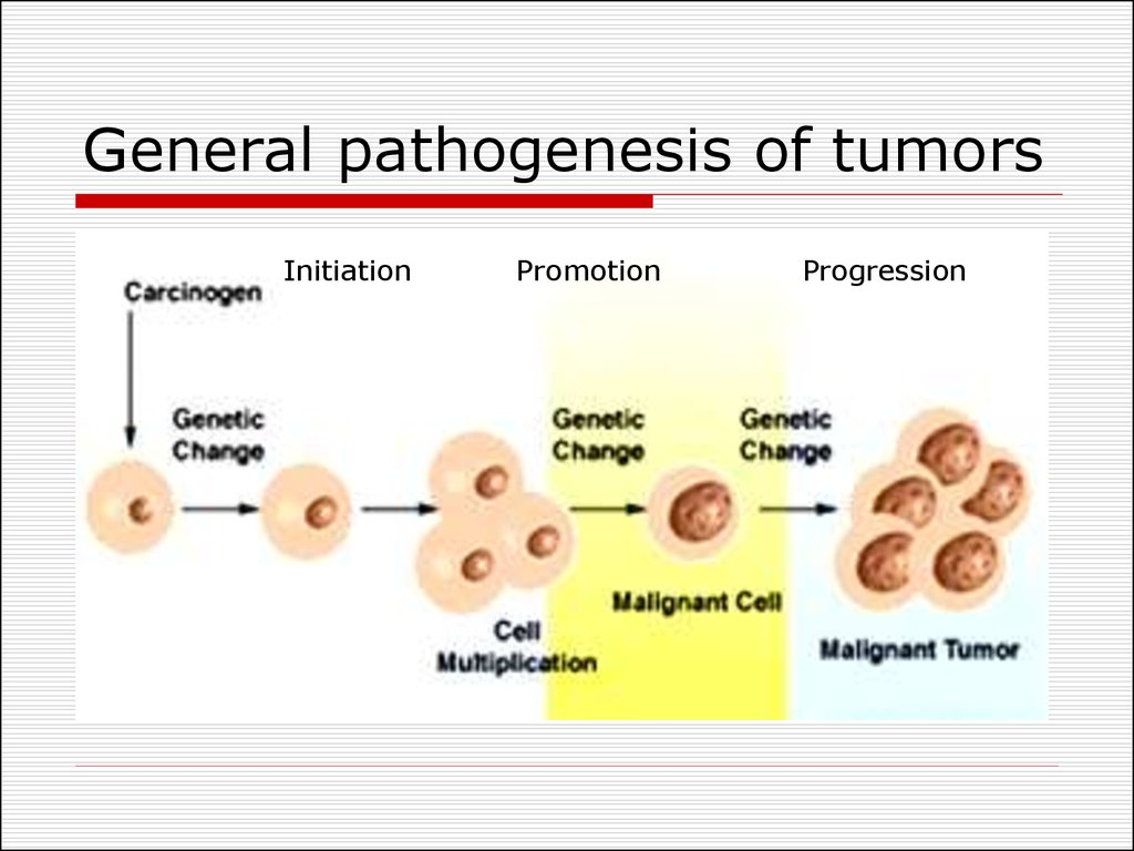 General pathogenesis of tumors