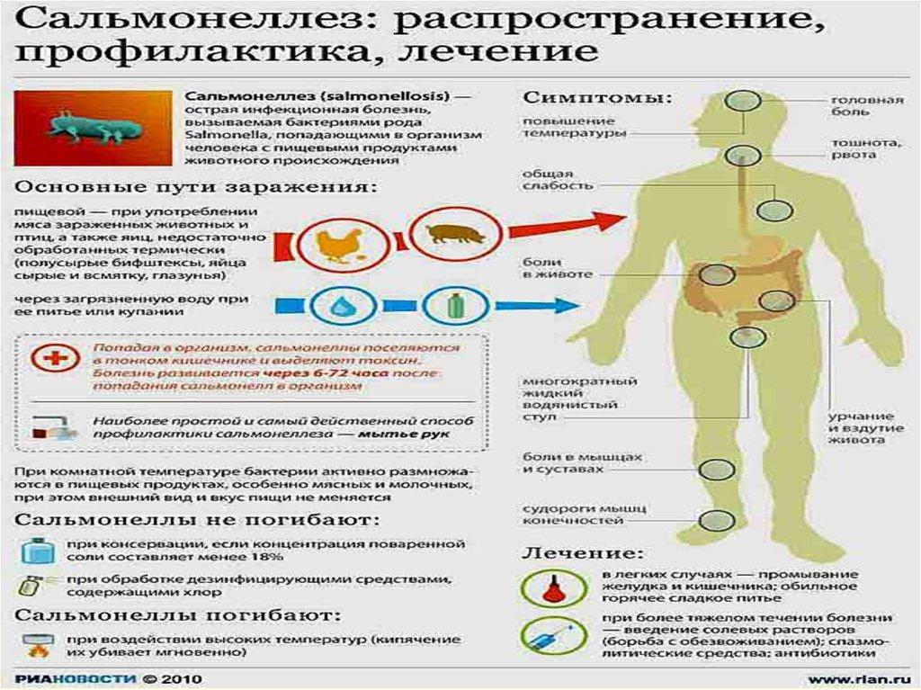 бактерии и их использование реферат