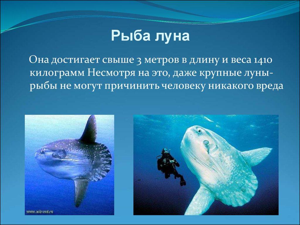 интересные факты о рыбах с картинками дать развиваться грибку