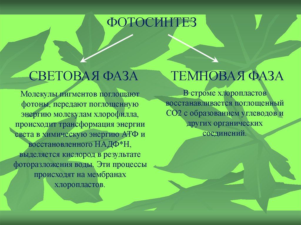 epub Deja Review Pathology 2010