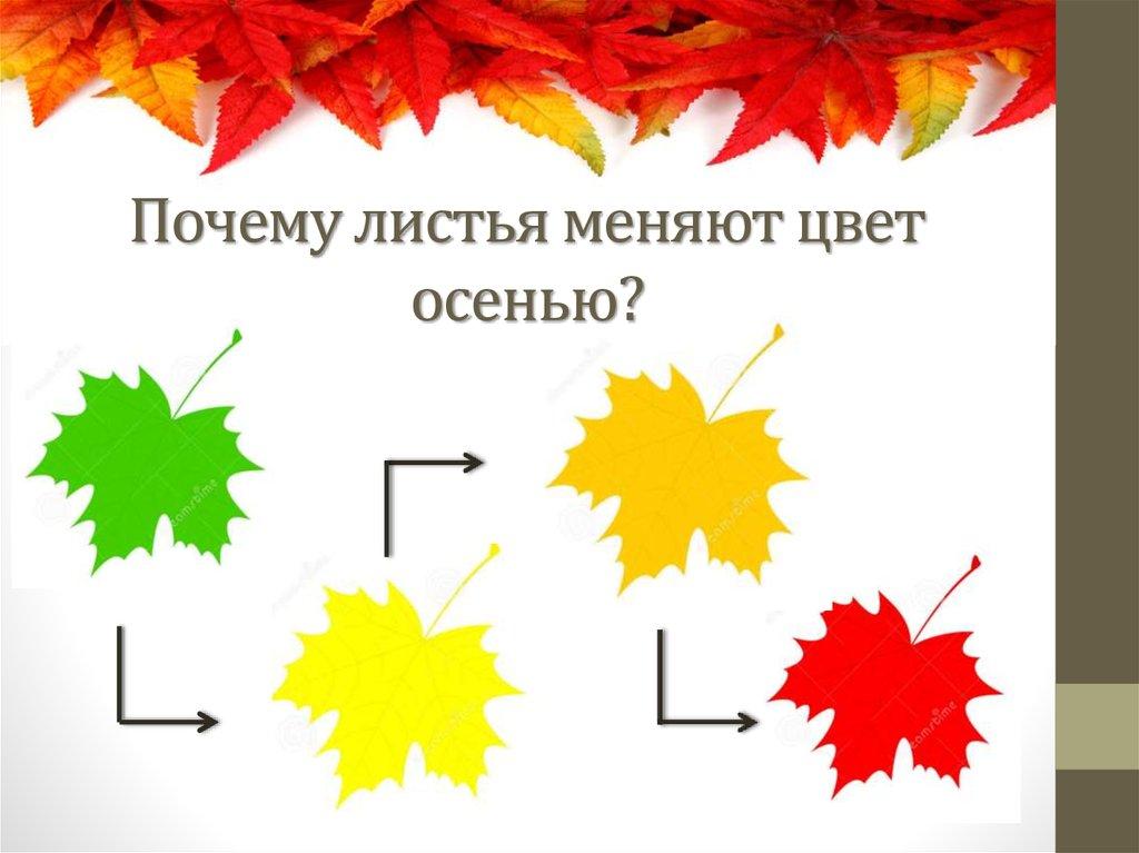 парковочный столбик как окрашиваются листья деревьев осенью обучить