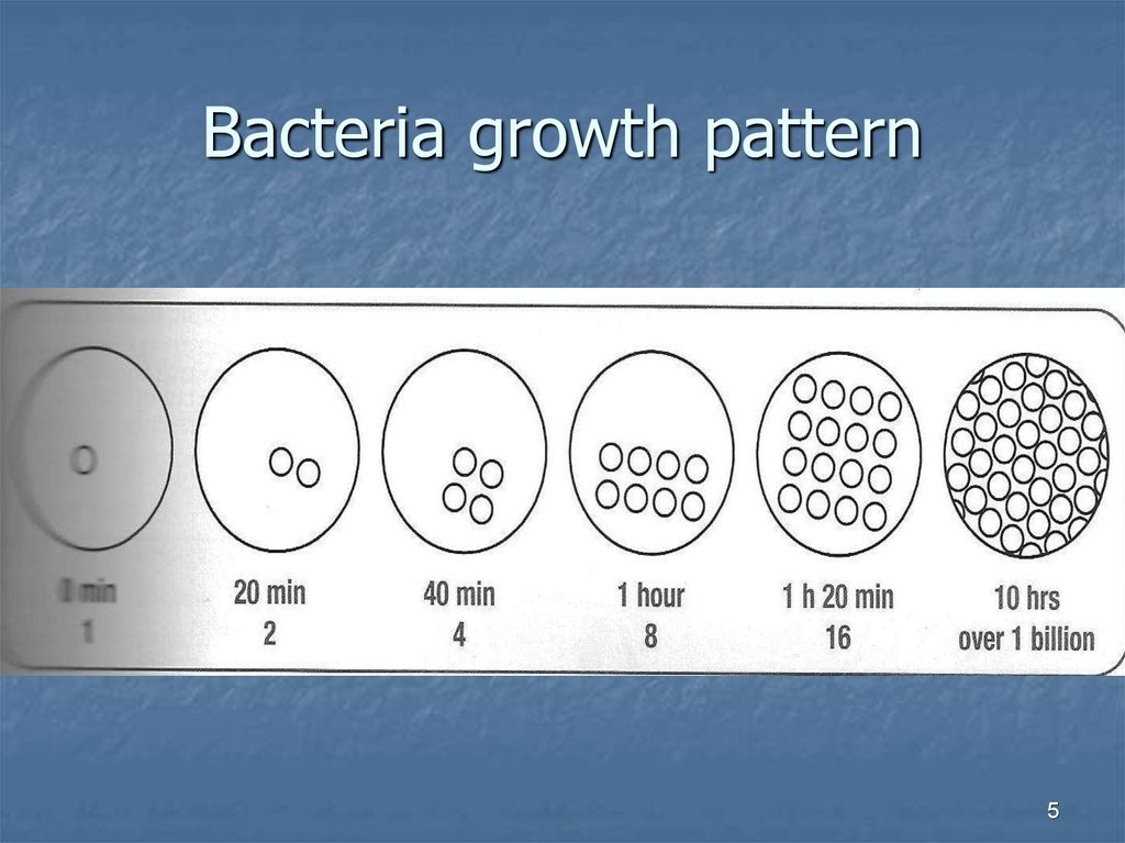 Bacteria growth pattern