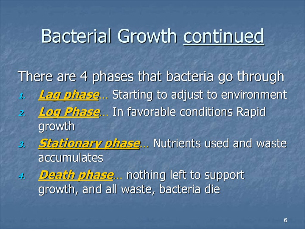 Bacterial Growth continued