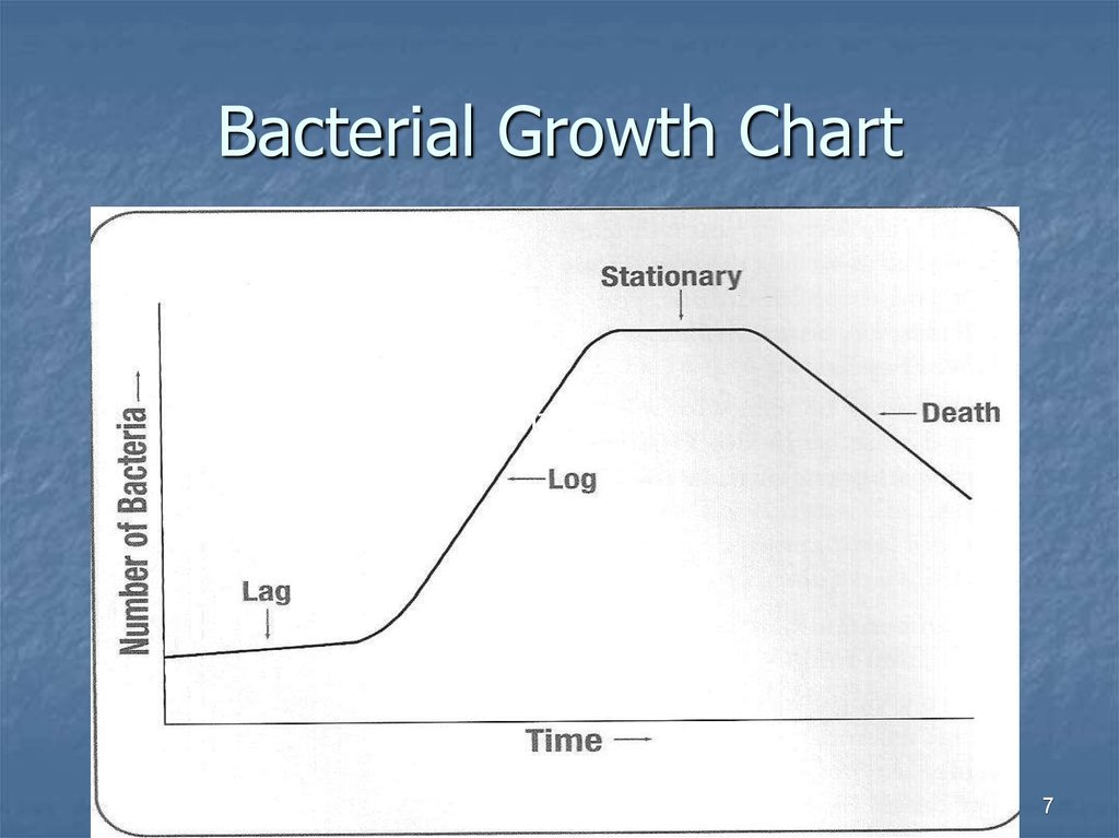 Bacterial Growth Chart
