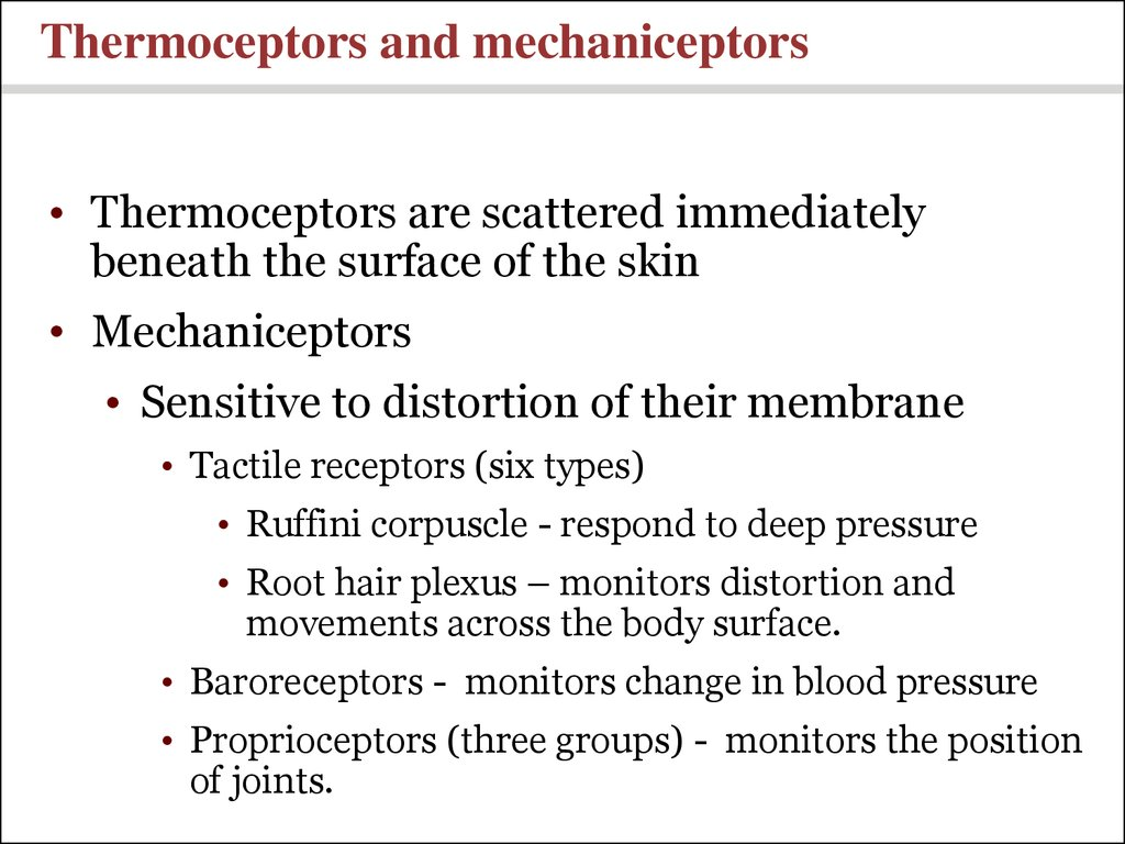 Thermoceptors and mechaniceptors