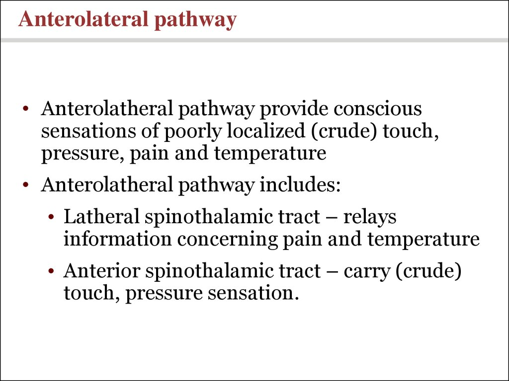 Anterolateral pathway