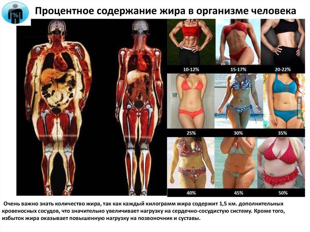 стоимость частного содержание мышц и жира в теле человека бывает так