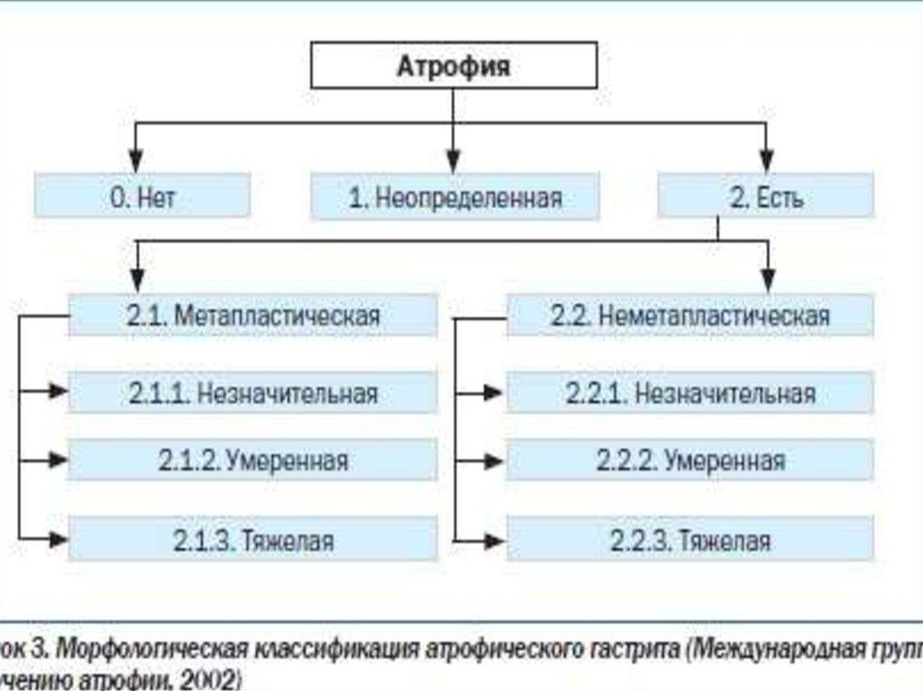 Схема постановки пиявок при гипертонии (гирудотерапия )