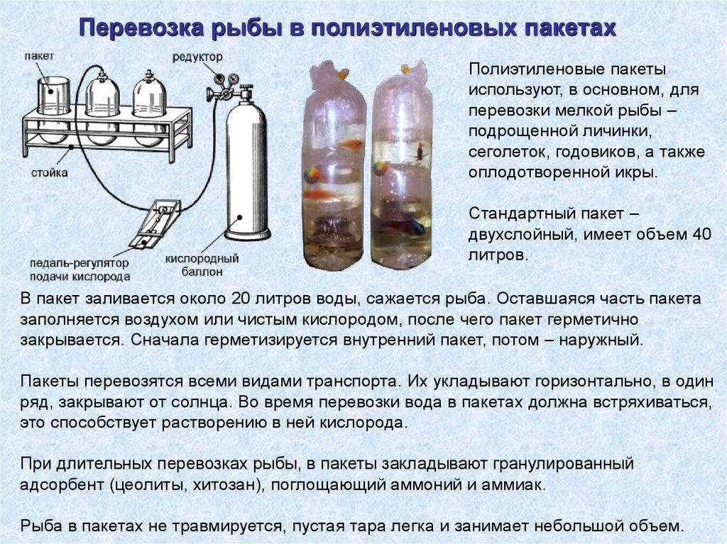 Перевозка икры и спермы
