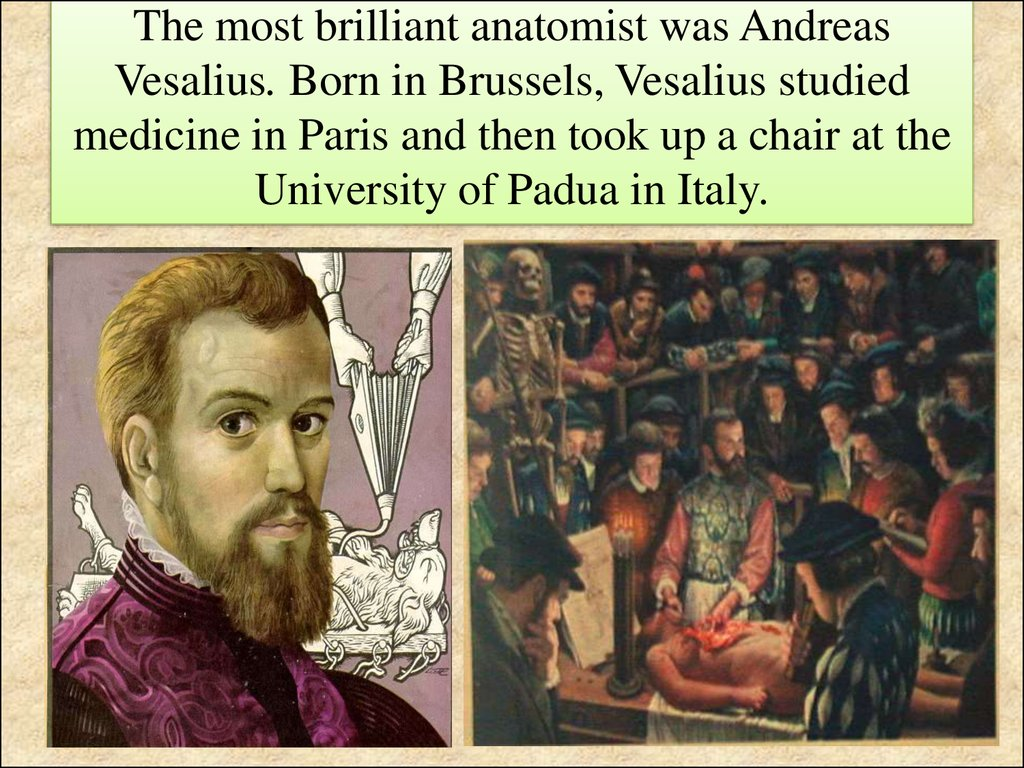 The most brilliant anatomist was Andreas Vesalius. Born in Brussels, Vesalius studied medicine in Paris and then took up a chair at the University of Padua in Italy.