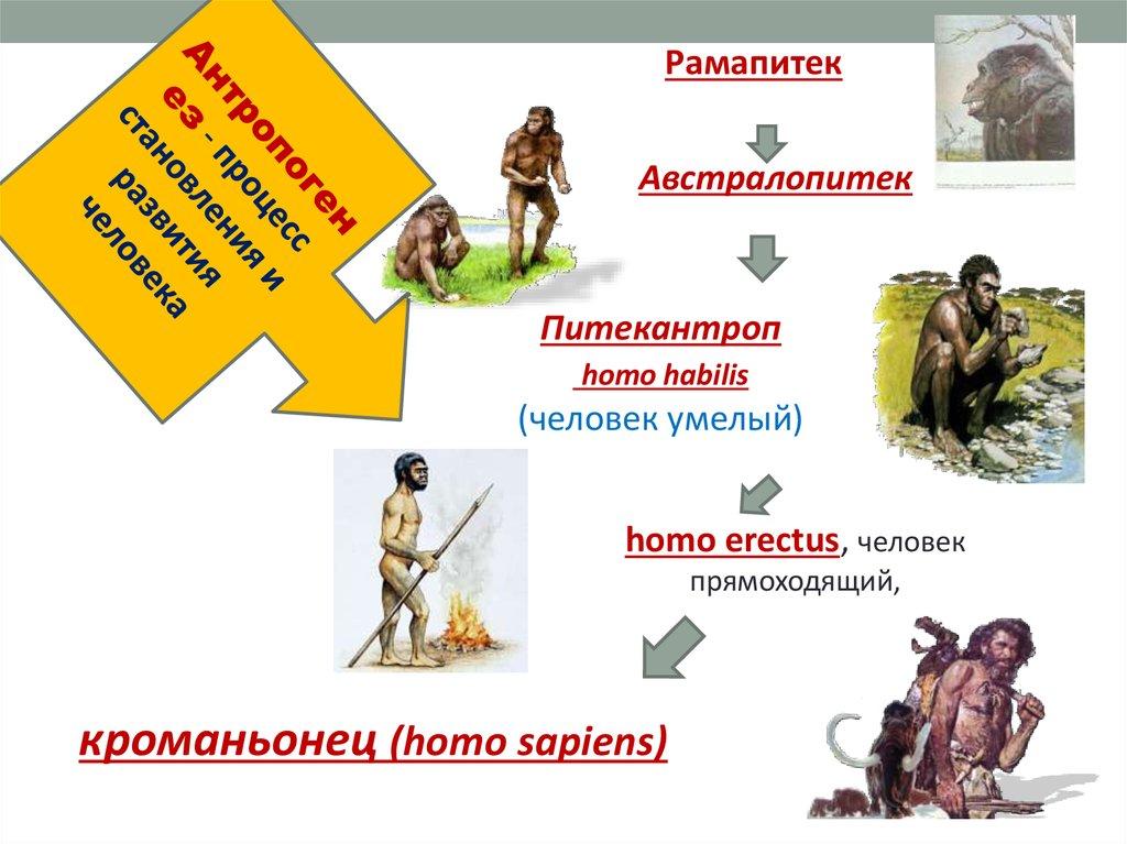 Презентация Теории Происхождения Человека.ppt
