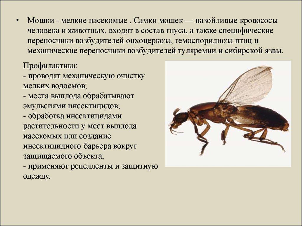 Развитие гетерономности насекомых